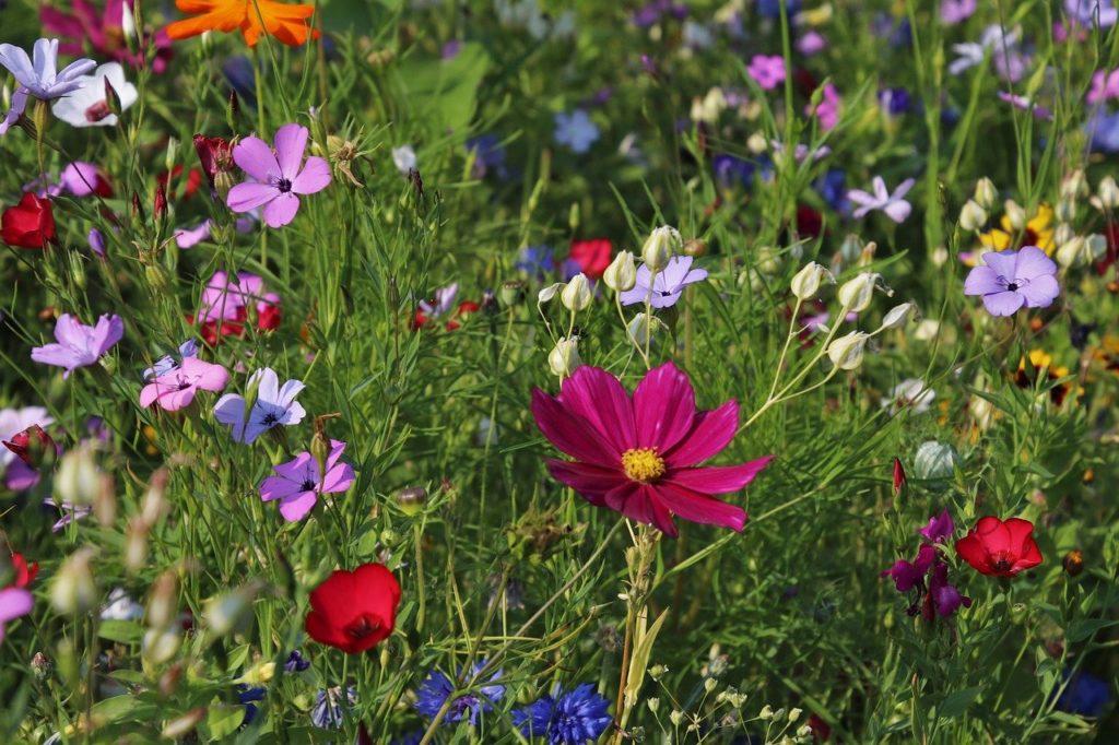 flowers, meadows, grass